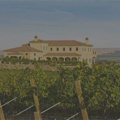 International Vineyard