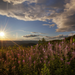 Sunset view at Pittsfield State Forest in Western Massachusetts